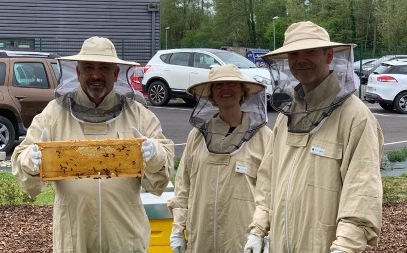 Atelier Ruches d'abeilles chez APF Entreprises 64 : un projet engagé et engageant